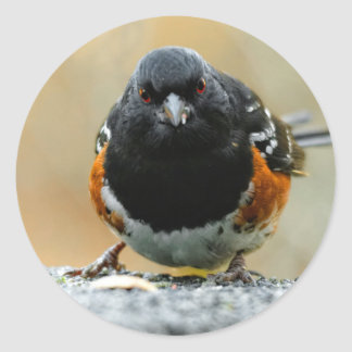 Profile of a Spotted Towhee Round Sticker