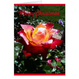 Rose de Noël Carte De Vœux