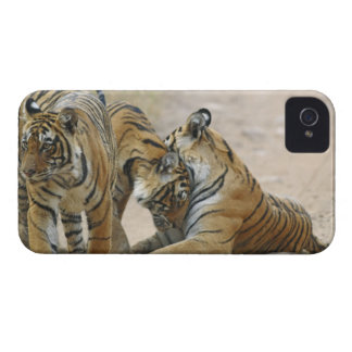 Royal Bengal Tiger and young ones - touching iPhone 4 Cover