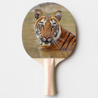 Royal Bengal Tiger at the waterhole Ping-Pong Paddle