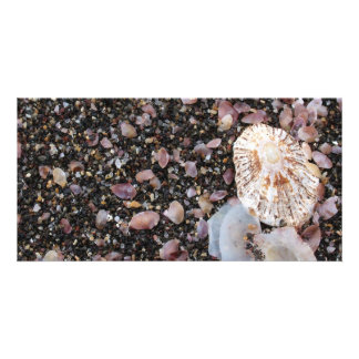 Shells Photo Cards