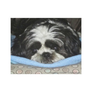 Shih Tzu Puppy Canvas Art to Warm Your Heart Stretched Canvas Print