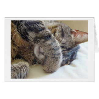 SORROW LOSS OF YOUR ***FAMILY CAT*** GREETING CARD