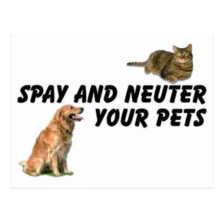 Spay and Neuter Postcard