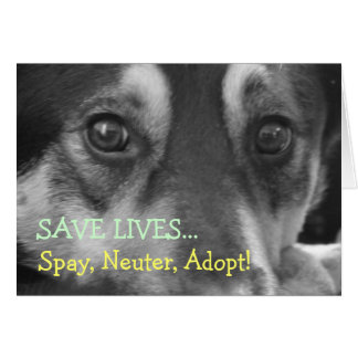 Spay Neuter Adopt Pet Dog Rescue Foster Greeting Card