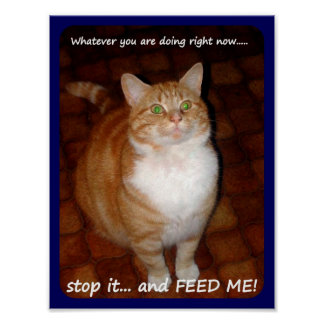 Stop it and FEED ME! Poster