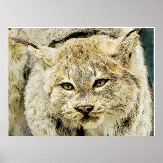 Stuffed Bobcat Closeup Poster