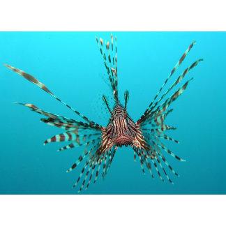 Marine Life / Oceans