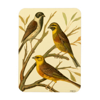 Three Domestic Birds Perched on a Branch Rectangular Photo Magnet