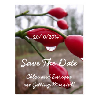 Twin Rose Hips And Rain Wedding Save the Date Card Postcard
