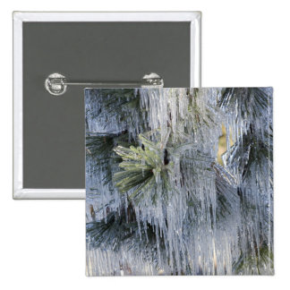 USA, Oregon, Bend. The ice on Ponderosa pine 2 Inch Square Button