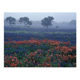 USA, Texas, near Lytle Fog, oaks, blue bonnets Postcard