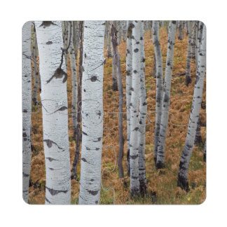 USA, Utah, Uinta-Wasatch-Cache National Forest 2 Drink Coaster Puzzle