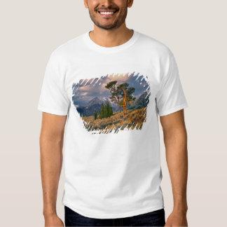 USA, Wyoming, Grand Teton NP. Sunrise greets a Tshirt