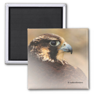 Vignetted Profile of a Peregrine Falcon Square Magnet