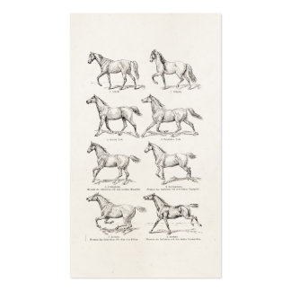 Vintage 1800s Horse Gaits Illustration Horses Business Card