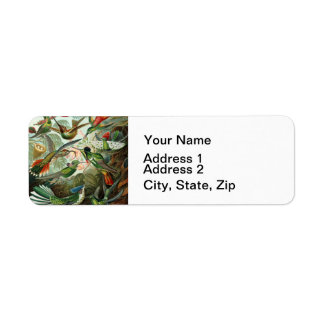 Vintage hummingbirds scientific illustration return address label