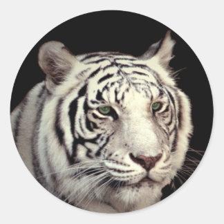 White Bengal Tiger Round Sticker