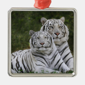 White phase, Bengal Tiger, Tigris Silver-Colored Square Ornament