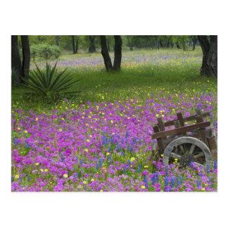 Wooden Cart in field of Phlox, Blue Bonnets Postcard